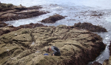 Percebeiro (barnacle picker) in the Cape Roncudo